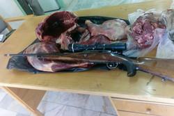دستگیری شکارچی - شکار - لاشه یک رأس کل وحشی