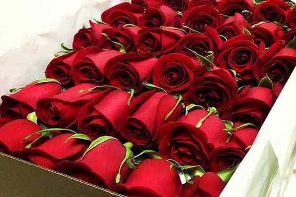 خسارت کرونا به تولید گل رز در خراسانجنوبی/تولید سه هزار  شاخه گل