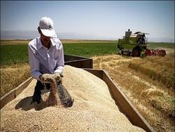 انتاج القمح في ايران يتخطى 10 مليون طن