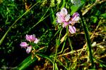 برگزاری سمینار راهکارهای تولید وفرآوری گیاهان دارویی دریاسوج