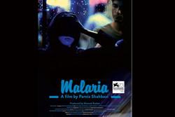 فیلم «مالاریا» در جشنواره ونیز پذیرفته شد/ اکران در پاییز