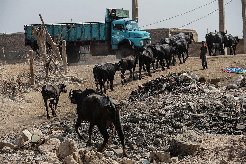 محله گاومیش آباد اهواز