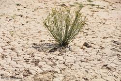 جنوب استان البرز از خشکسالی شدید رنج میبرد