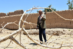 بدهی ۵۳.۴ میلیارد ریالی دولت به کشاورزان خراسان جنوبی