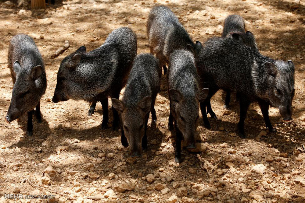 حیوانات گرسنه باغ وحش ونزوئلا