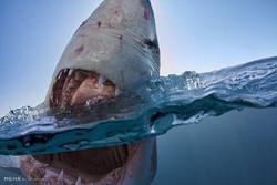 دندان های هیولا