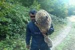 عامل کشتار پلنگ سوادکوه به دو سال حبس محکوم شد