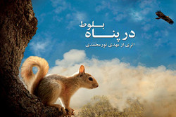 Namur Nature Festival to display Iranian documentary