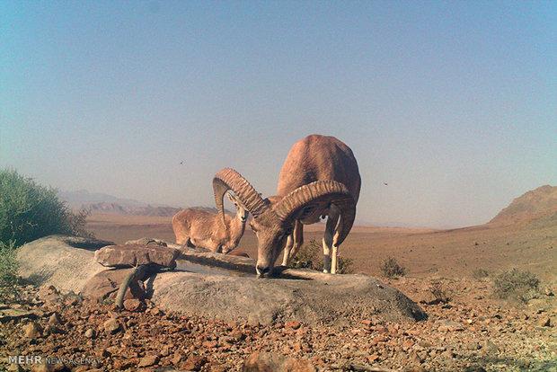 قرقهای اختصاصی حیات وحش در بهاباد ایجاد شود