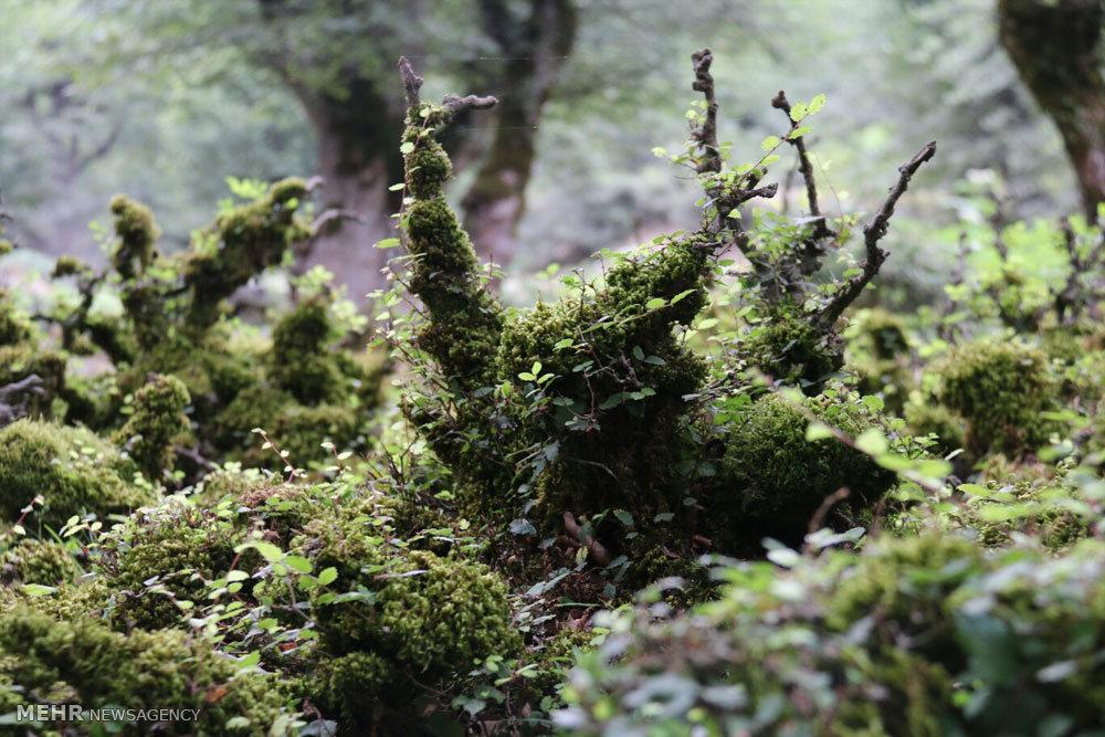 طبیعت مسیر خلخال به اسالم