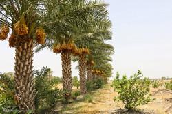 ضرورت تسریع در روند اخذ اسناد باغات و مزارع در اروندکنار