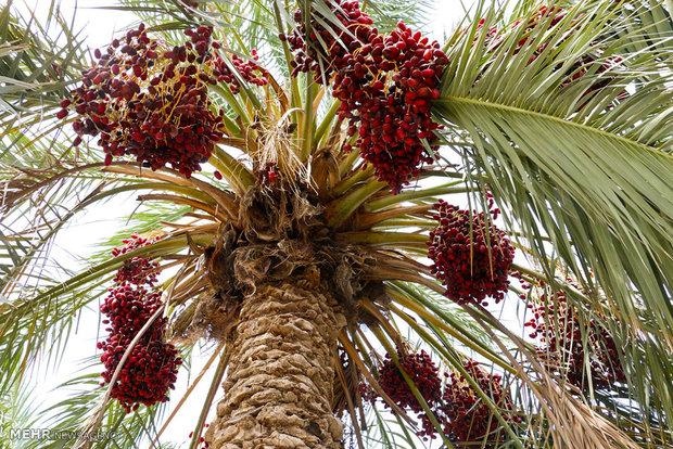 صنایع تبدیلی کشاورزی و شیلات در استان بوشهر گسترش یابد