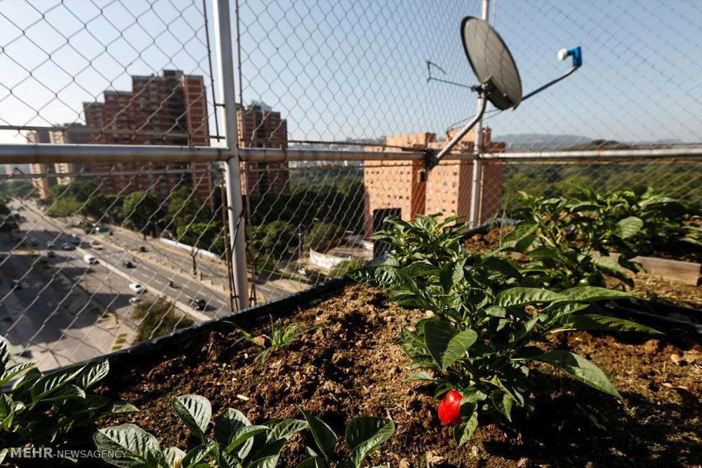 راه حل ونزوئلا برای حل بحران کمبود غذا