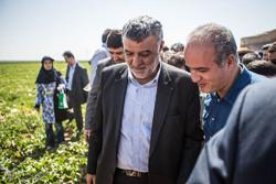 Tarım Cihadı Bakanı Kazvin'de