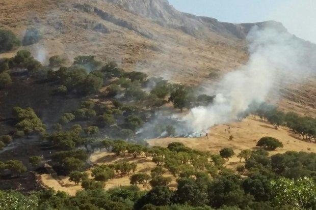 کراپشده -  آتش سوزی مجدد در گیان4