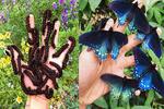 پرورش پروانه در خانه
