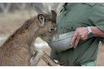 «نذر طبیعت» برای کمک به حیوانات گرسنه