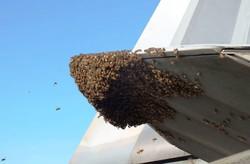 زنبورها پیشرفته ترین جنگنده جهان را زمین گیر کردند