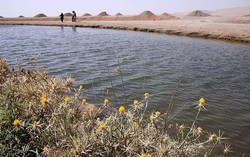 وجود ۸۰ سراب در استان کرمانشاه/ وضعیت تالاب ها مطلوب است