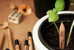 عکس: مدادی که گیاه میشود