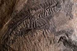 کشف فسیلهای ۴۰هزارساله در محلات/ قدمت برخی بقایا ۱۰۰هزار سال است