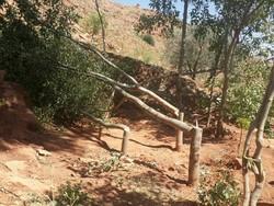 قطع درختان در خراسان رضوی؛ مبارزه با آفات یا تجارت زغال