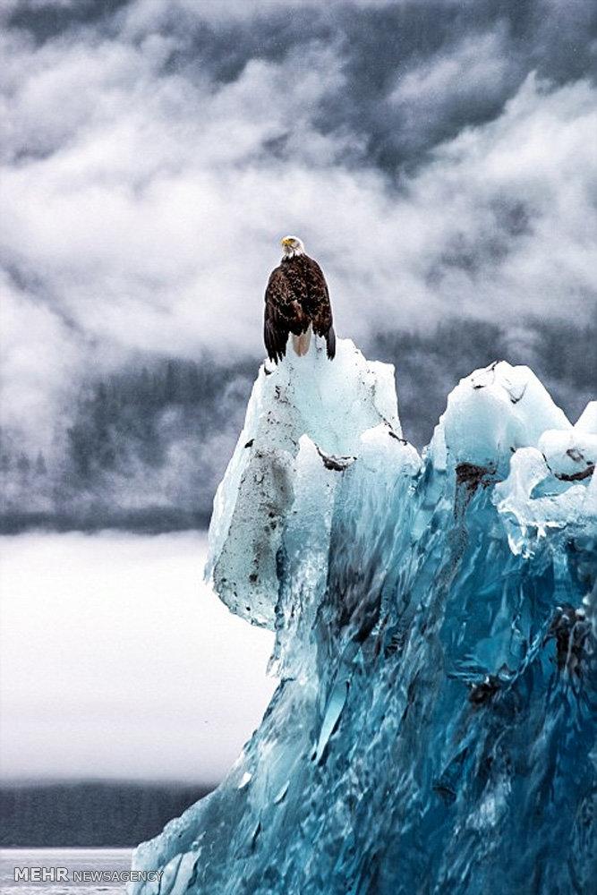 کوه های یخ 3 هزار ساله