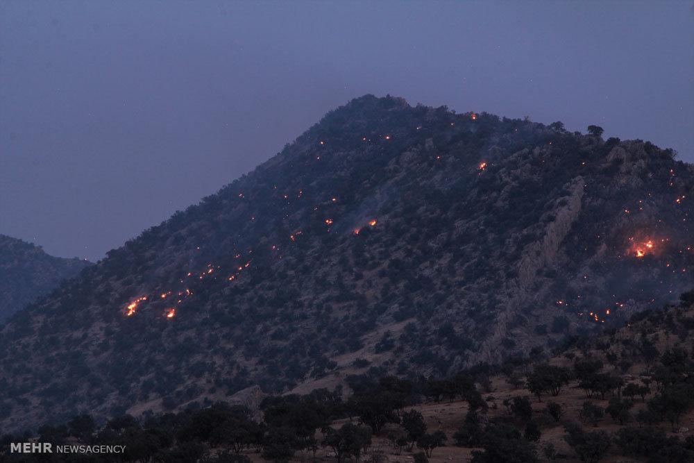 Bildergebnis für درختان ۴۰۰ سالهای که شبانه به آتش کشیده میشوند