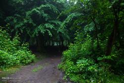 جنگل های هیرکانی مازندران ثبت جهانی شد