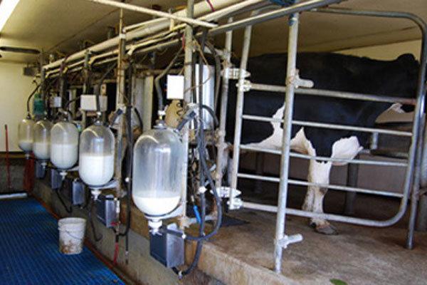 سالانه ۲۲۰ هزار تن شیر در نظرآباد تولید میشود