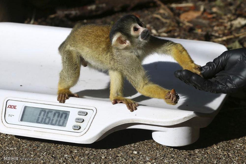 وزن کشی حیوانات