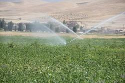 بی توجهی کشاورزان نسبت به ممنوعیت کشت برنج/ آب کافی وجود ندارد