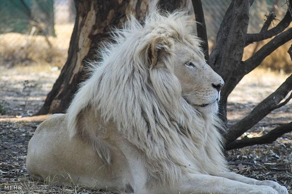 حیوانات در معرض انقراض