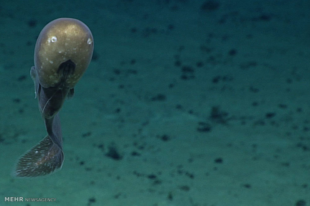 موجودات اعماق اقیانوس