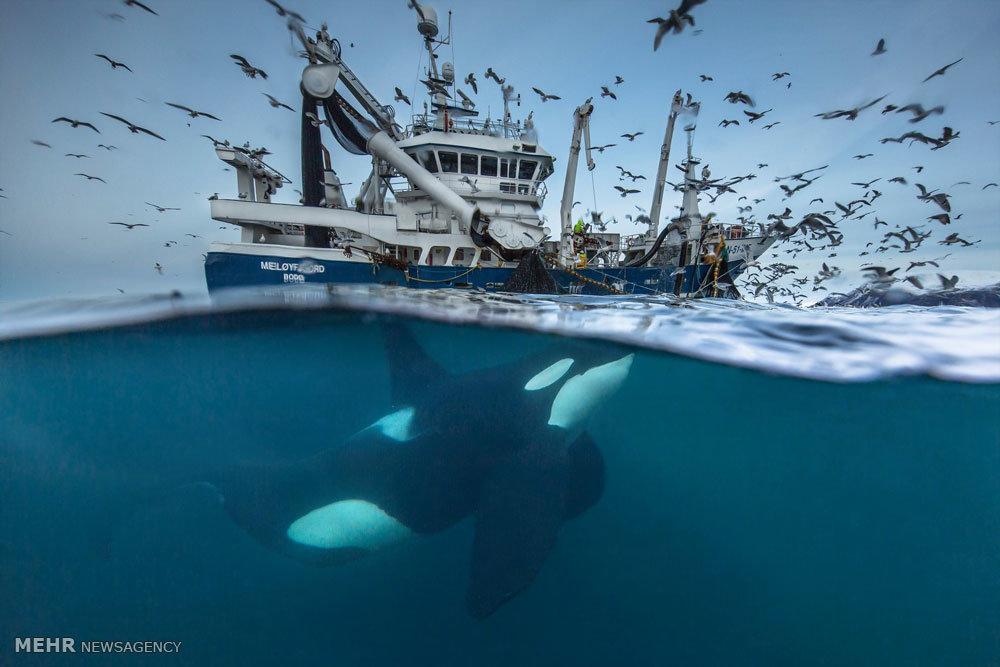 فینالیست های مسابقه عکاسی حیات وحش