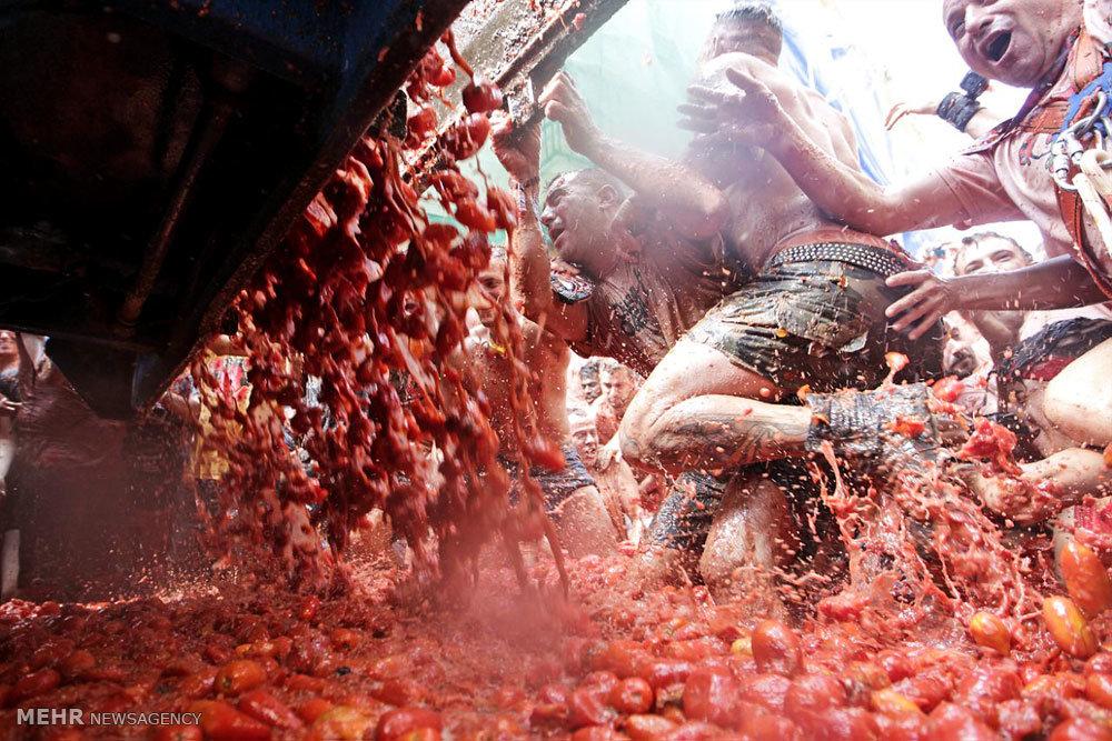 جشنواره جنگ گوجه فرنگی
