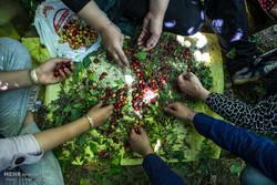 """مهرجان """"القرانيا"""" في قرى """"ألموت"""" في قزوين"""