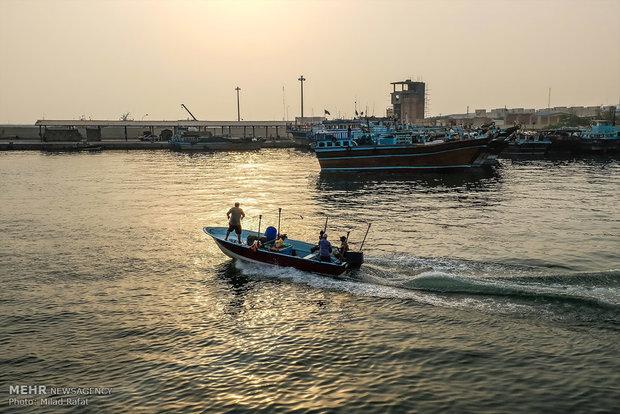 """القريدس """"الجمبري"""" على شواطئ جنوب ايران"""