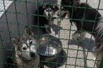 بلاتکلیفی «جمعه بازار سگ» در حاشیه پایتخت/ سکوت قانون در خرید و فروش سگ