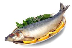 مصرف ماهی موجب افزایش قدرت باروری می شود