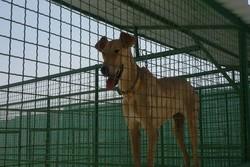 اولین مرکز عقیم سازی سگهای بلاصاحب در شمال گشایش یافت