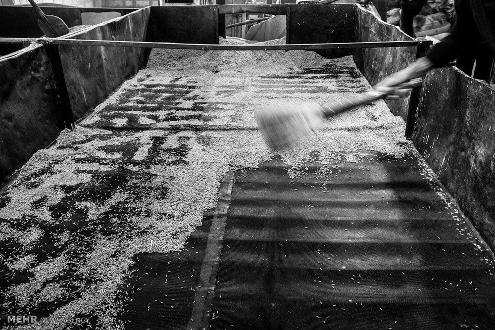 کارگاه برنجکوبی