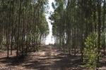 سرانه جنگل در آذربایجان غربی ۳۷ هزارم هکتار است