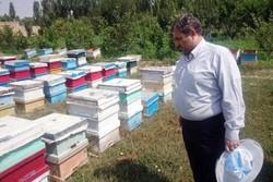 سرشماری زنبورستانها به خاطر کرونا انجام نمیشود