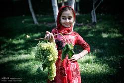 چهارمین جشنواره ملی خوشه برتر انگور