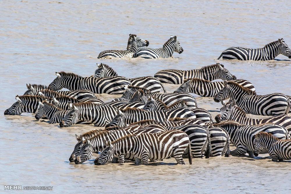 گونه های در معرض انقراض