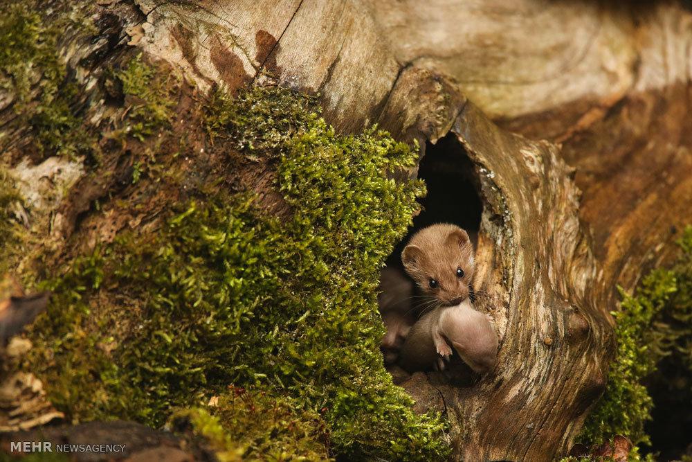 مسابقه عکاسی حیات وحش بریتانیا