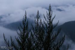 """مرتفعات """"تنكابن"""" 2000 متر عن سطح البحر"""