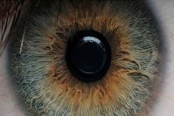 Researchers culture eye stem cells on nano scaffolds