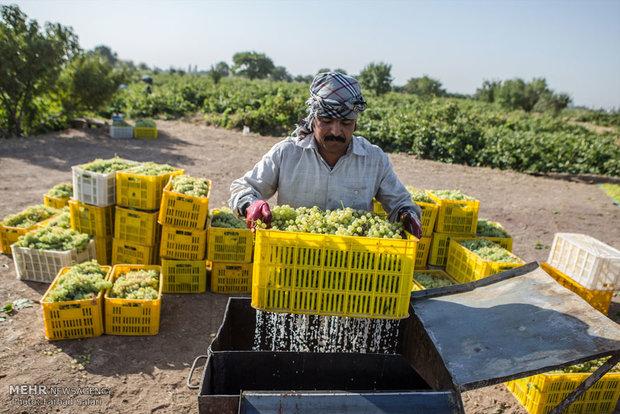 جزئیات افزایش تورم زراعی/افزایش ۵۰درصدی شاخص نرخ سبزیجات در بهار